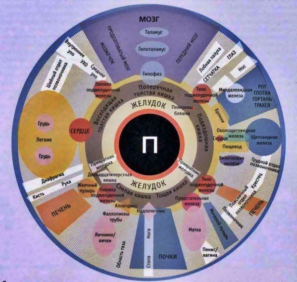 Иридодиагностика схема радужной оболочке глаза 551