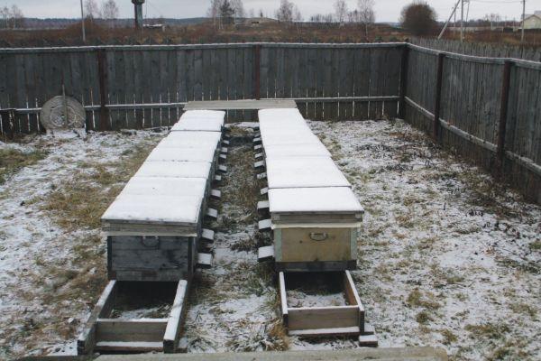 14-рамочные лежаки зимуют на воле