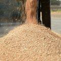 Цены на пшеницу в Иране в сентябре 2015 года