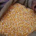Кукуруза в мешках