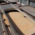 Снижение цен на кукурузу 3 класса с поставкой на Узбекистан
