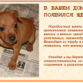 В вашем доме появился щенок